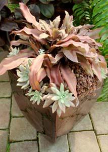 Bromeliads và echeveria là những loài thực vật an toàn để có những người bạn bốn chân của bạn.