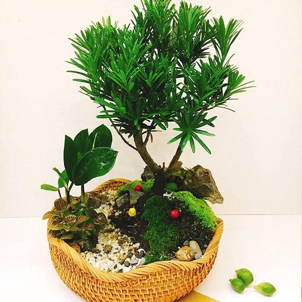 Tuổi Dần hợp cây gì? Người tuổi Dần nên trồng cây gì để năm mới được bình an, may mắn - 3