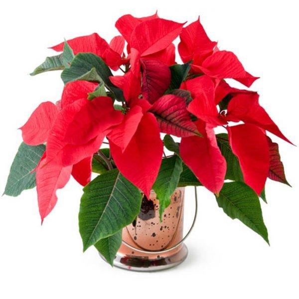 Tuổi Dần hợp cây gì? Người tuổi Dần nên trồng cây gì để năm mới được bình an, may mắn - 9
