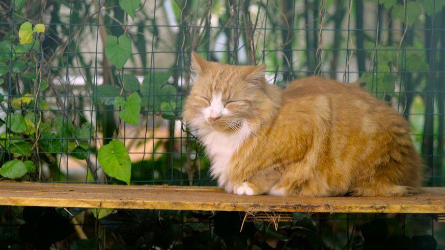 Đó là Catio Daddio!  Chuyến tham quan bằng video do mèo con dẫn dắt