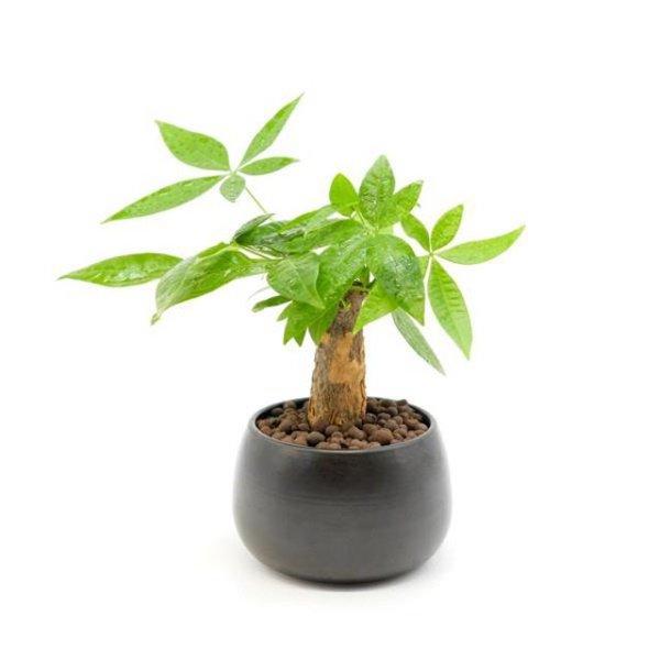 Tuổi Dần hợp cây gì? Người tuổi Dần nên trồng cây gì để năm mới được bình an, may mắn - 1