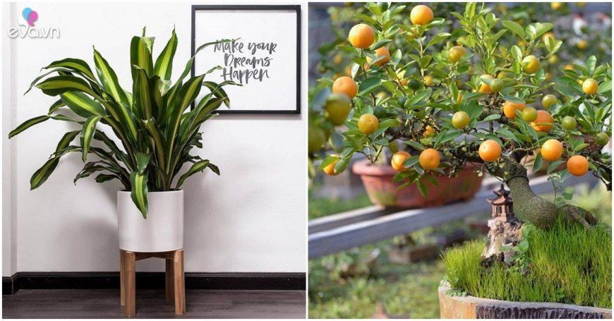 7 loại cây cảnh trồng trước cửa nhà giúp tài vận lên cao, gia chủ yên tâm