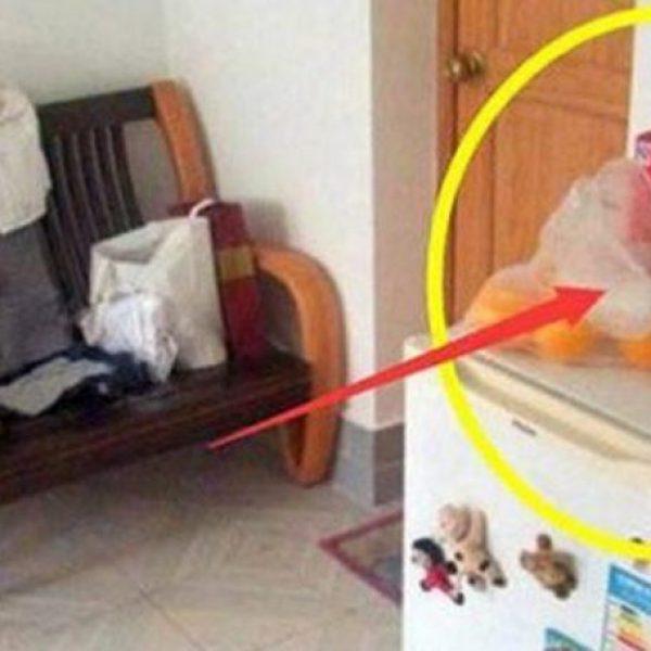 Mẹ chồng cấm không cho bỏ thứ này lên tủ lạnh, biết lý do tôi đã làm ngay