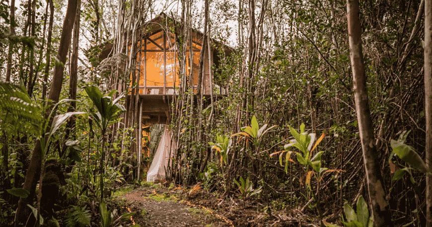 Khám phá một ngôi nhà trên cây nhiệt đới nhỏ bé ở Hawaii