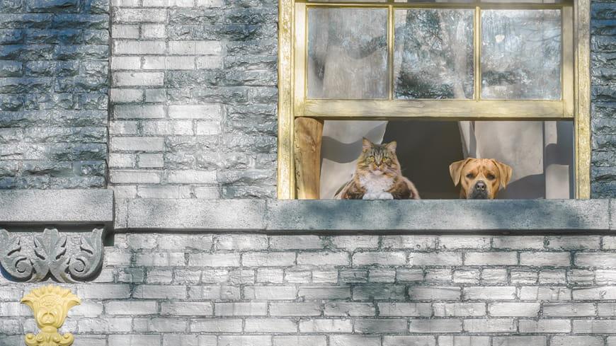 4 cách để đảm bảo thú cưng của bạn là người cho thuê tốt