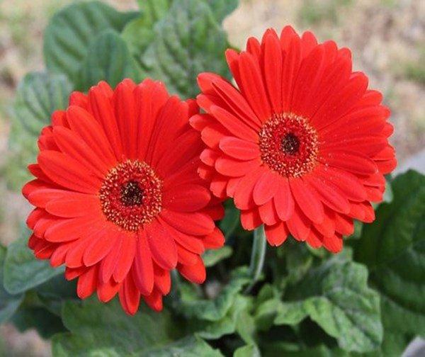 Cúng ngày 23 tháng Chạp tránh tuyệt đối loại hoa này kẻo cả năm mất lộc - 3