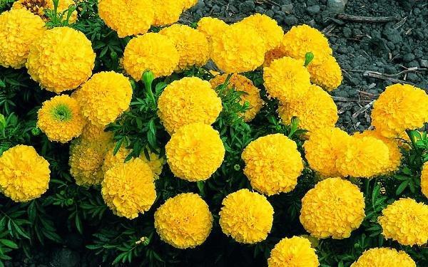 Cúng ngày 23 tháng Chạp tránh tuyệt đối loại hoa này kẻo cả năm mất lộc - 4
