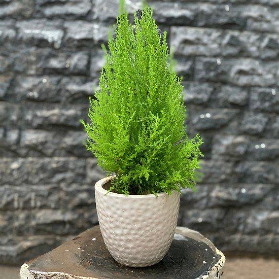Tuổi Dậu hợp cây gì? Năm 2020 trồng cây gì trong nhà để được may mắn cả năm? - 4