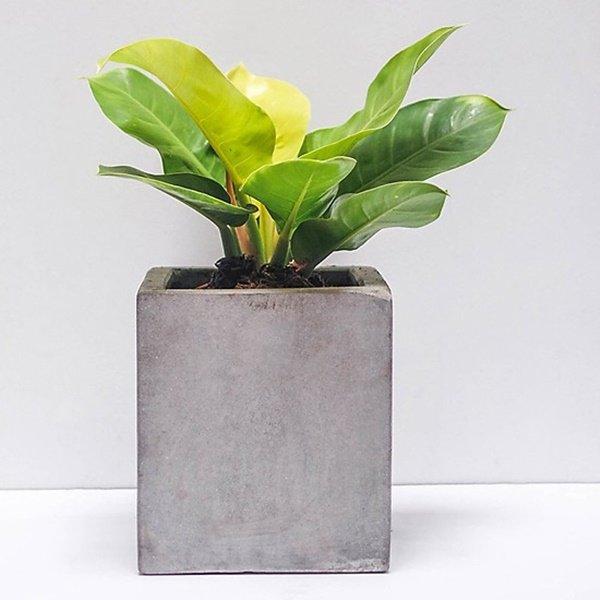 Tuổi Dậu hợp cây gì? Năm 2020 trồng cây gì trong nhà để được may mắn cả năm? - 10