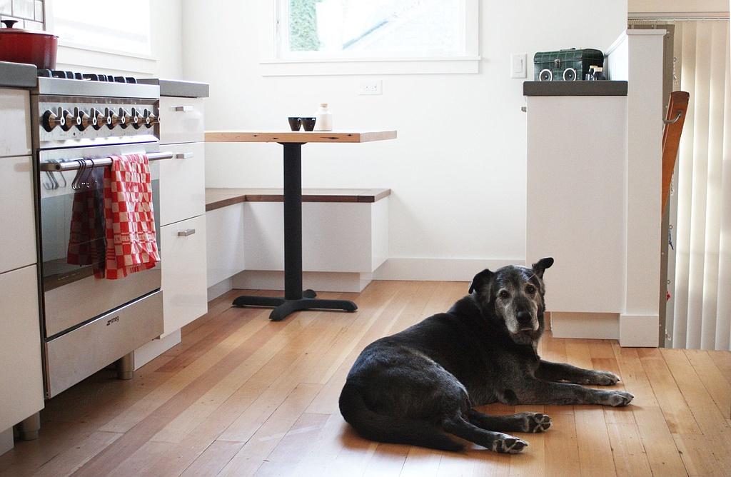 5 Mẹo Tìm Cho Thuê Với Một Con Chó Lớn