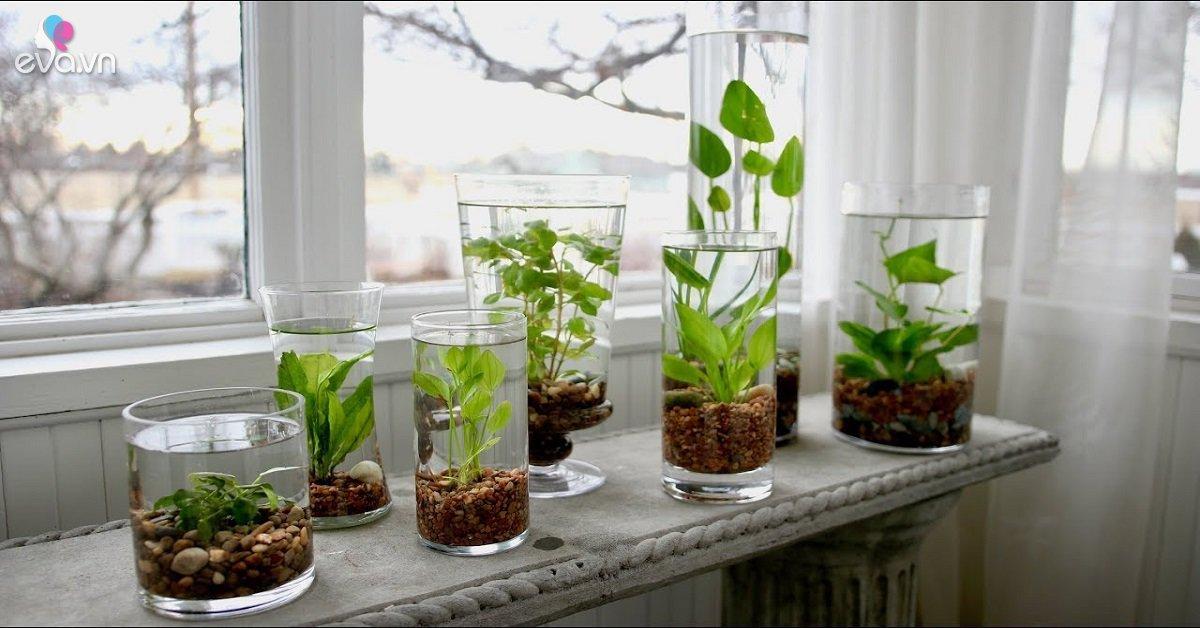 Tuổi Dậu hợp cây gì? Năm 2020 trồng cây gì trong nhà để được may mắn cả năm?